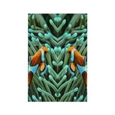 clownfish Rectangle Magnet