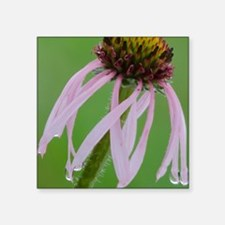 "Coneflower in the Rain Square Sticker 3"" x 3"""