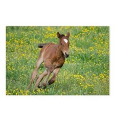Galloping Foal Postcards (Package of 8)