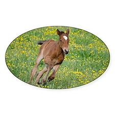 Galloping Foal Decal