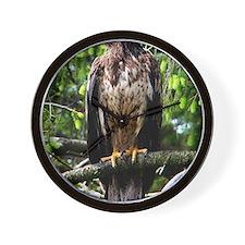 American Bald Eagle 9 x 12 Wall Clock