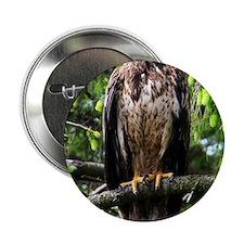 "American Bald Eagle 9 x 12 2.25"" Button"