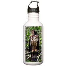 American Bald Eagle 11 Water Bottle