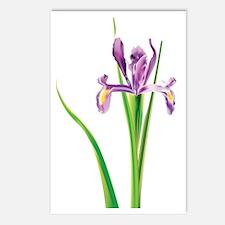 Iris d' flower Postcards (Package of 8)