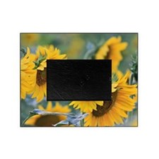 Sunflowers Picture Frame