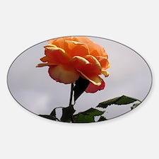 Peach Rose 2 Decal