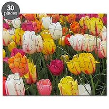 Spring Tulip Field Puzzle
