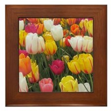 Spring Tulip Field Framed Tile