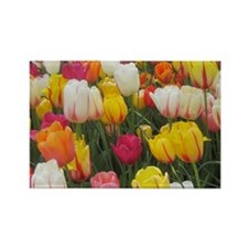 Spring Tulip Field Rectangle Magnet
