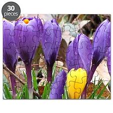Spring Crocus Bulbs Puzzle