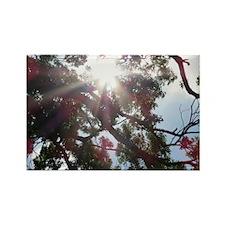 Sunburst Rectangle Magnet