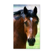 Horse portrait 2 Rectangle Car Magnet