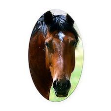 Horse portrait 2 Oval Car Magnet