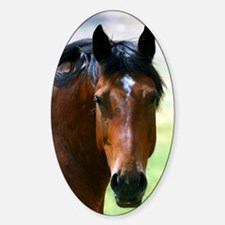 Horse portrait 2 Sticker (Oval)