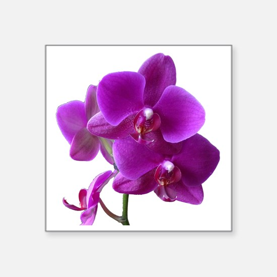 "Striking Purple Orchid Flow Square Sticker 3"" x 3"""