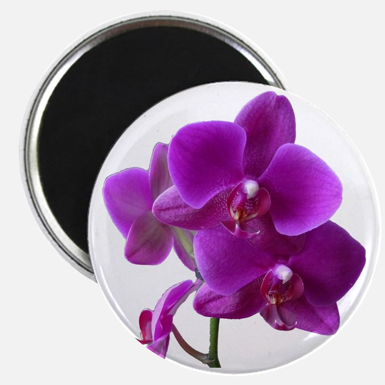 Striking Purple Orchid Flower Magnet