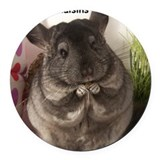 Chinchilla Round Car Magnets