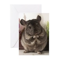 lovely chinchilla Greeting Card
