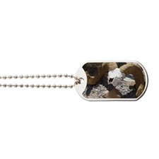 Big Horn Sheep Skull Dog Tags