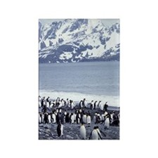 KING PENGUINS ON SHORE AT THE SOU Rectangle Magnet