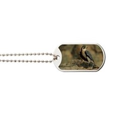 PEREGRINE FALCON ON ROCK IN NORTH AMERICA Dog Tags