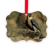 PEREGRINE FALCON ON ROCK IN NORTH Ornament