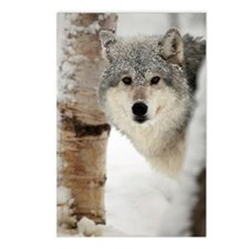 Timber Wolf Postcards (Package of 8)