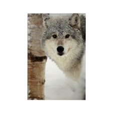 Timber Wolf Rectangle Magnet