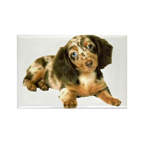 Shy_Low Puppy Rectangle Magnet