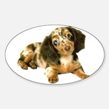 Shy_Low Puppy Oval Decal