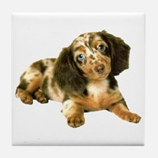Shy_Low Puppy Tile Coaster