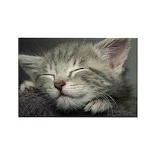 Grey kitten sleeping Rectangle Magnet