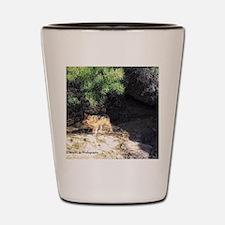 desert wolf Shot Glass