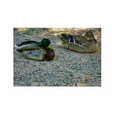 domestic ducks Rectangle Magnet