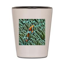 orange clownfish Shot Glass