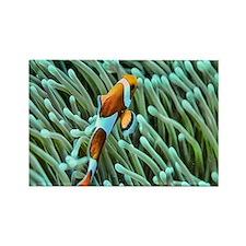 orange clownfish Rectangle Magnet