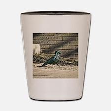 petrified forest black crow Shot Glass