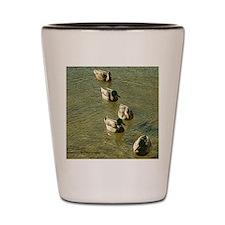sychronized swimming duck Shot Glass