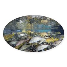 Schooling fish in the Dig marine ha Decal