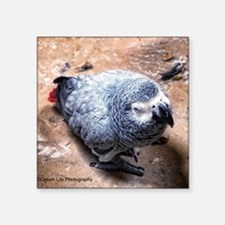 """African gray parrot Square Sticker 3"""" x 3"""""""