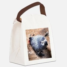 African gray parrot Canvas Lunch Bag