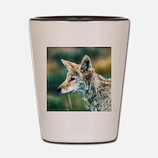 desert coyote Shot Glass