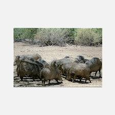 javelina - desert wild pigs Rectangle Magnet