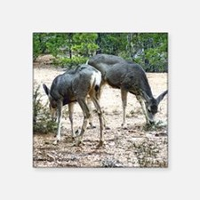 """whitetail deer family Square Sticker 3"""" x 3"""""""