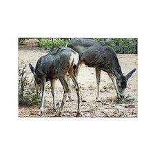 whitetail deer family Rectangle Magnet
