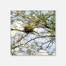 "bird nest Square Sticker 3"" x 3"""