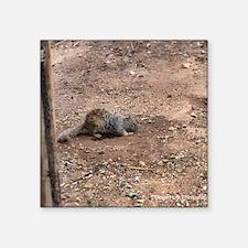 """gray squirrel Square Sticker 3"""" x 3"""""""