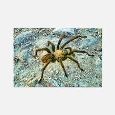 hairy tarantula Rectangle Magnet