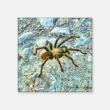 "hairy tarantula Square Sticker 3"" x 3"""