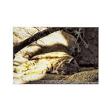 wildcat - bobcat Rectangle Magnet